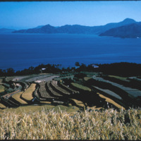 Japan, 1951:  Rice cultivation, terraced farming methods